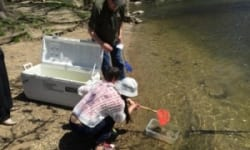 2015 May 2nd Salmon in the Classroom Release – A joint MWS Project with Novi Middle School